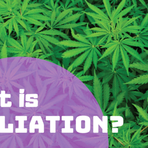 Cannabis Growers Guide: What is Defoliation?