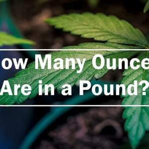 How Many Ounces are in a Pound?