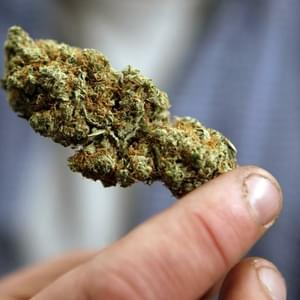 Marijuana's Moment