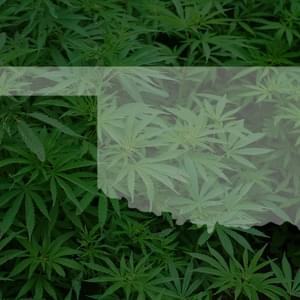 Medical marijuana: What will happen if Oklahoma voters say yes to State Question 788?