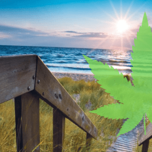 Michigan Marijuana Retail Stores to Open on December 1st