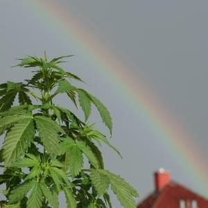 New Study Will Explore Medical Marijuana as a Treatment for Autism