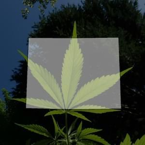 Pot Could Be Delivered To Your Doorstep Under Proposed Legislation