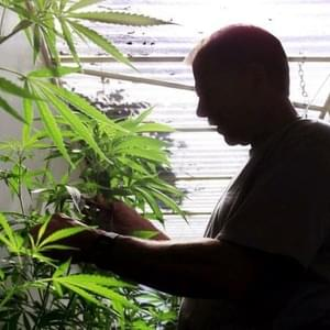Pro-cannabis group sues East Bay city over marijuana cultivation law