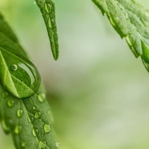 Sonoma DA To Clear Nearly 3,000 Marijuana-Related Convictions