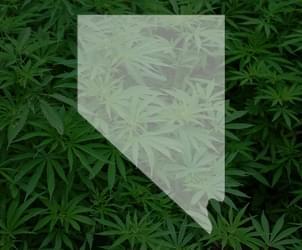 3 months into recreational marijuana sales, Nevada dispensaries experience pot shortage