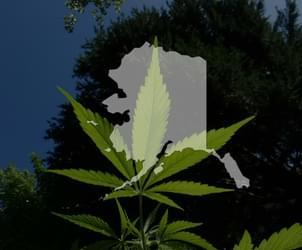 Alaska marijuana regulators to revisit onsite pot use debate