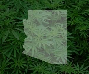 Arizonans Consumed Record 43 Tons of Cannabis in 2017: 50 Percent Higher Than '16