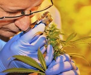 Ark. AG rejects marijuana proposal again