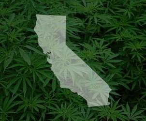 California lawmakers start push to lower state marijuana taxes
