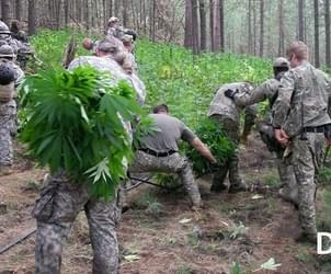 DEA's marijuana-eradication program still targets Washington, where (some) pot is legal