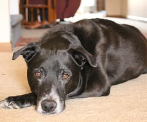 EXPERTS SAY MEDICAL MARIJUANA COULD BE GOOD FOR PETS