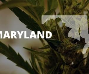 First Maryland medical marijuana grow operation approved