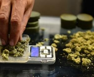 Hackers Cripple Leading Marijuana Sales System