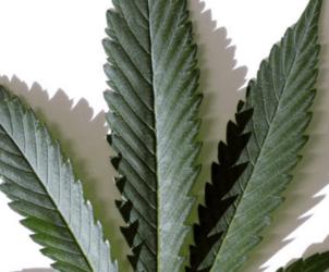 Maine approves recreational marijuana use