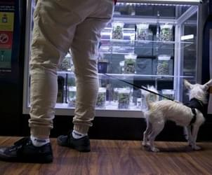 Marijuana businesses push back on Oregon's testing rules, ask for delay