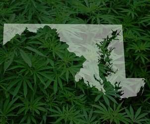 Maryland, after delays, begins the sale of medical marijuana