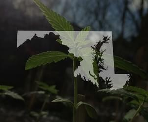 Maryland approves first medical marijuana dispensary