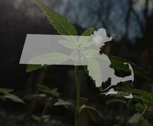 Mass. lawmakers unveil proposed overhaul of marijuana law