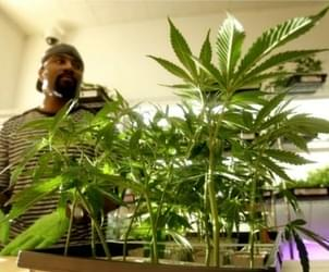Med pot shops could sell recreational marijuana under proposal