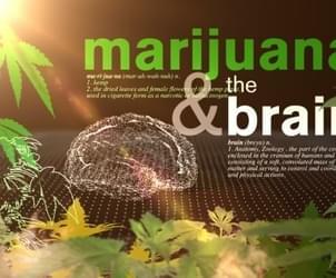 Medical marijuana and 'the entourage effect'