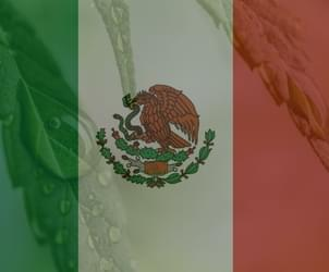 Medical marijuana approved by Mexican government