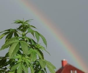 Mike Tyson breaks ground on 40-acre marijuana ranch in California
