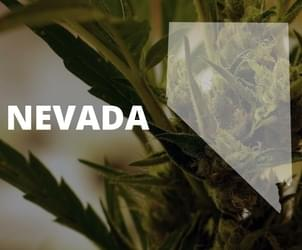Nevada recreational marijuana industry clears state hurdles