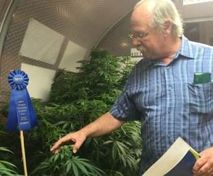 Oregon State Fair generates buzz with first legal pot display in U.S.