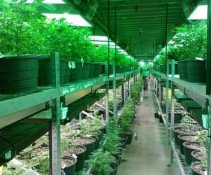 Puerto Rico's Medical Marijuana Industry Takes a Hit Due to Hurricane