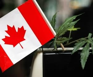 Trudeau Proposes Bill to Legalize Recreational Marijuana Use in Canada