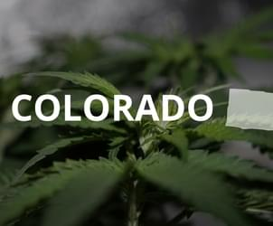 Two New Laws Take Aim At Black Market Marijuana In Colorado