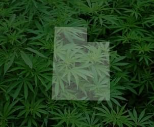 Utah governor to oppose medical marijuana ballot initiative