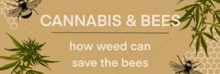 Cannabis & Bees: How Weed Can Save the Bees
