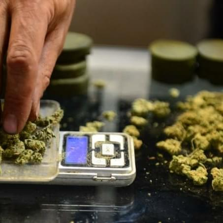 Hackers Cripple Leading Marijuana Sales System