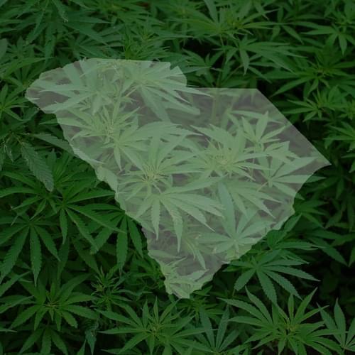 Medical marijuana advances in SC Senate