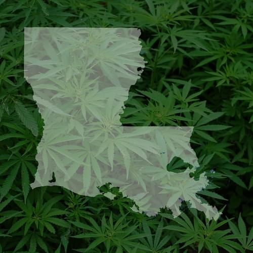 Medical marijuana wait: Regulatory hurdle for Louisiana crop