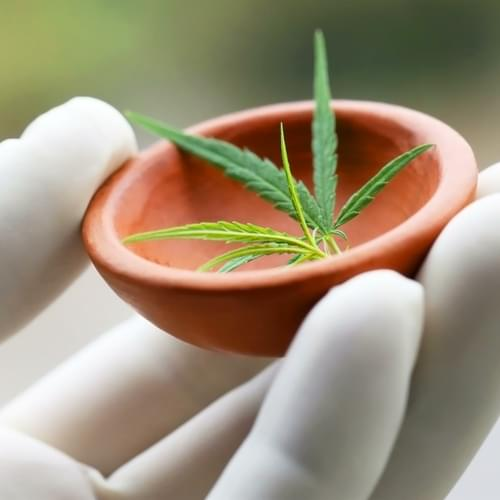 National Academy Of Sciences Pushes For Rescheduling Of Marijuana