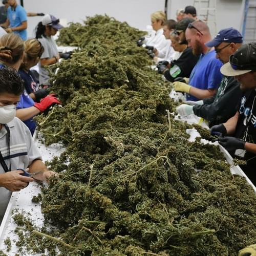People in the US and Canada spent over $53 billion on marijuana in 2016