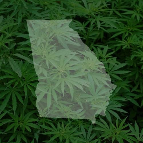 Proposed Georgia bill would allow medical marijuana production