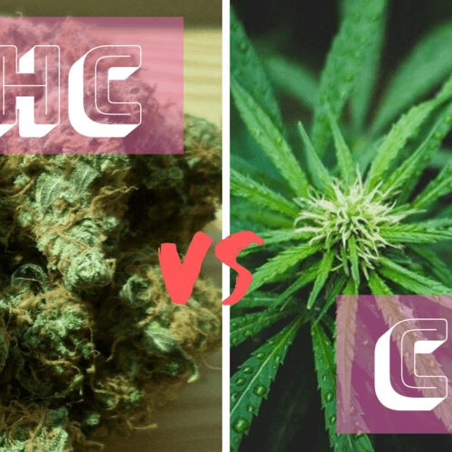 THC and CBD: What is the Difference?