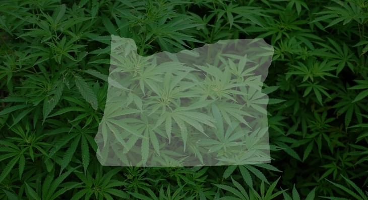Oregon to pause accepting marijuana license applications