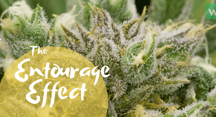 The Entourage Effect: How to Get the Most Out of Your Cannabis