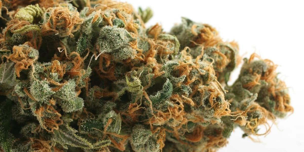 Megan's Organic Market | Morro Bay Marijuana Delivery