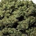 West Coast Alternative Marijuana Dispensary