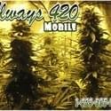 Always 420 Mobile Marijuana Delivery Service