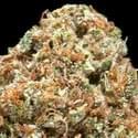 Heavenly Herbal Collective Marijuana Dispensary