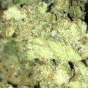 Holistic Solutions Marijuana Dispensary