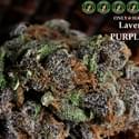 Hazy Colitas Marijuana Dispensary