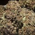 Da'Hall of Medicine Collective Marijuana Delivery Service